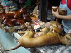 chopping up dog meat